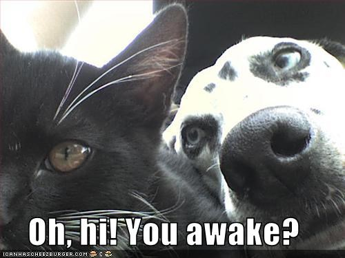 Oh, hi! You awake?