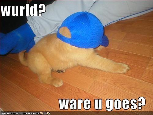 covered,golden retriever,hat,hats,head,puppy,where,world