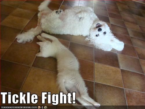Tickle Fight!