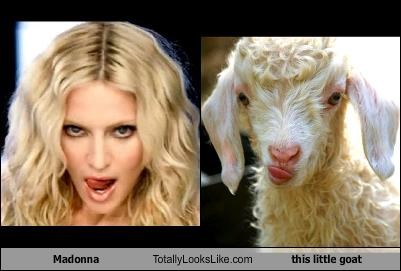 Madonna Totally Looks Like this little goat