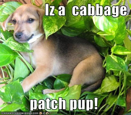 Iz a  cabbage   patch pup!