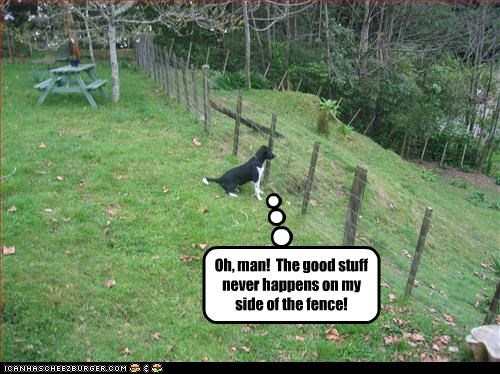 Oh, man!  The good stuff never happens on my side of the fence!