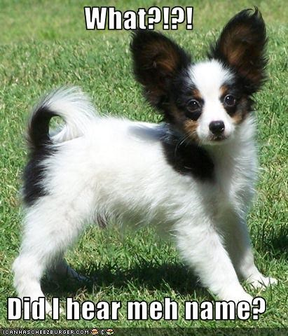 What?!?!  Did I hear meh name?