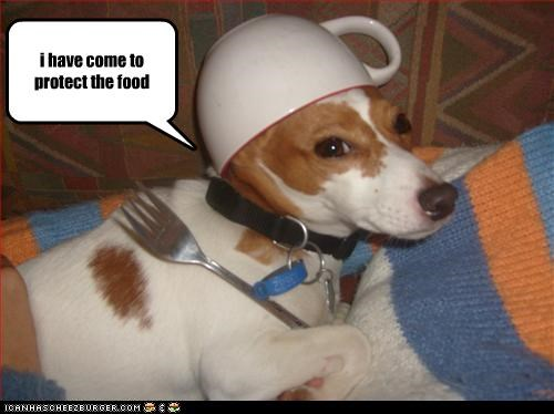 cup,food,guard dog,hats,jack russel terrier,protect