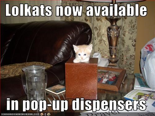 Lolkats now available    in pop-up dispensers