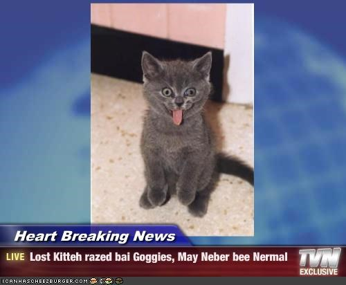 Heart Breaking News - Lost Kitteh razed bai Goggies, May Neber bee Nermal