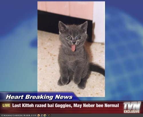 Heart Breaking News - Lost Kitteh razed bai Goggies, May Neber bee Nermal