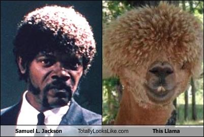 actor,animals,hair style,llama,Samuel L Jackson