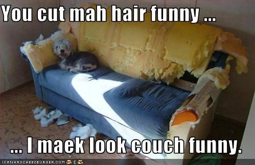 You cut mah hair funny ...  ... I maek look couch funny.