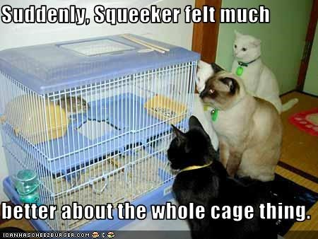 Suddenly, Squeeker felt much  better about the whole cage thing.