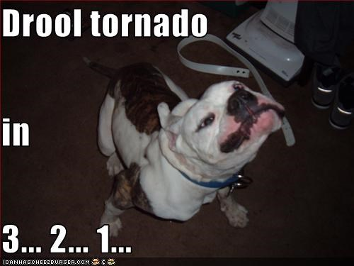 Drool tornado  in  3... 2... 1...