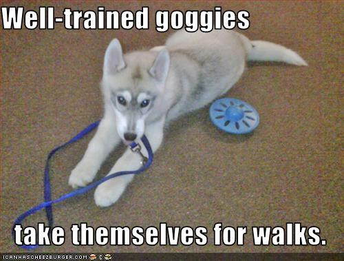 Well-trained goggies  take themselves for walks.