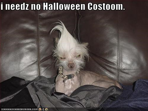 i needz no Halloween Costoom.