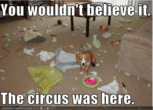 You wouldn't believe it.  The circus was here.