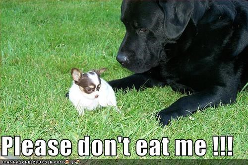 Please don't eat me !!!