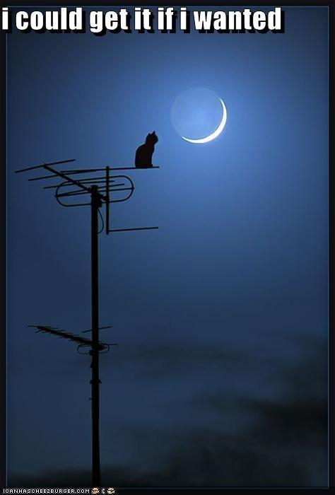 moon,want
