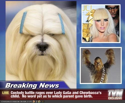 Breaking News - Custody battle rages over Lady GaGa and Chewbacca's child.  No word yet as to which parent gave birth.