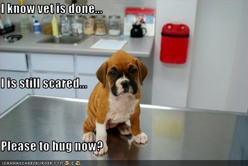 I know vet is done... I is still scared... Please to hug now?