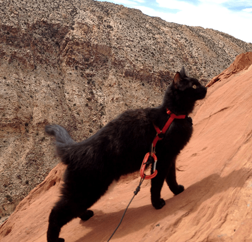 Meet Millie, the Rock Climbing Cat