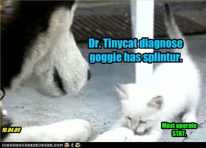 Dr. Tinycat diagnose goggie has splintur.
