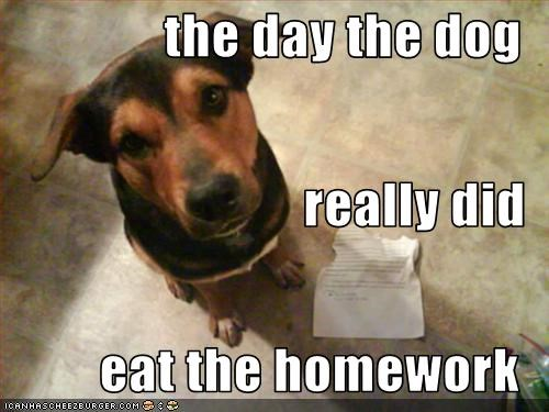 the day the dog really did eat the homework