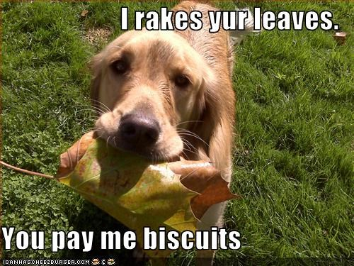 I rakes yur leaves.  You pay me biscuits