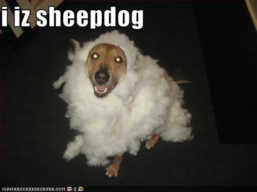 clouds,costume,cotton balls,english sheepdog,Fluffy,labrador