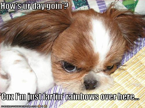 How's ur day goin'?  'Cuz I'm just fartin' rainbows over here...