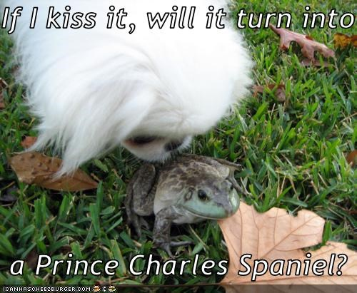 If I kiss it, will it turn into    a Prince Charles Spaniel?