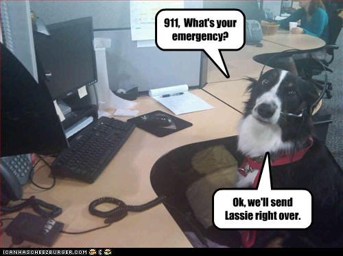 border collie,call,emergency,headset,lassie,phone