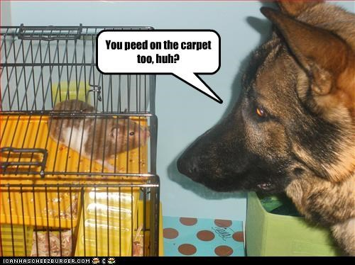 You peed on the carpet too, huh?