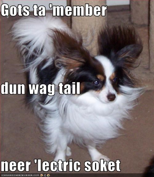Gots ta 'member dun wag tail neer 'lectric soket