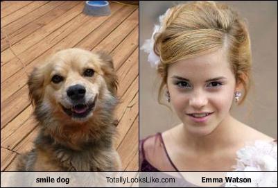 O χαμογελαστός σκύλος..