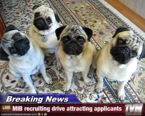 Breaking News - MIB recruiting drive attracting applicants