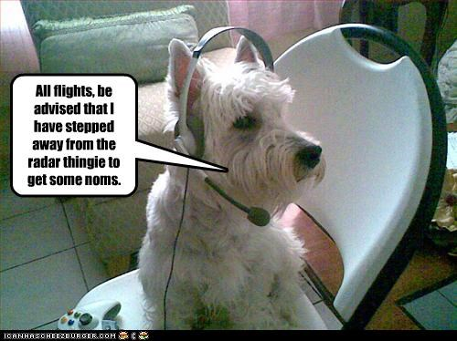 flying,headset,nom,radar,west highland white terrier,work