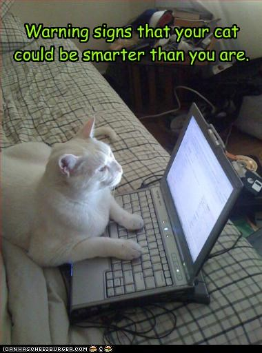 Warning signs that your cat could be smarter than you are.