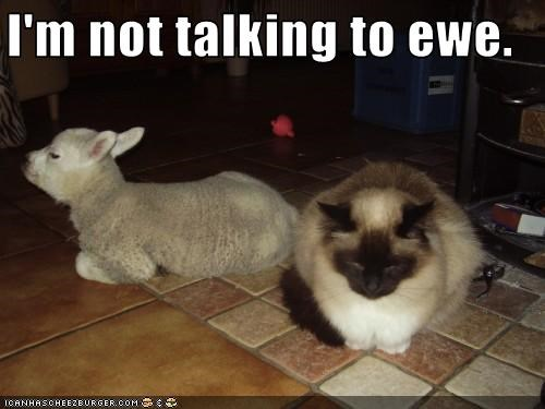 I'm not talking to ewe.