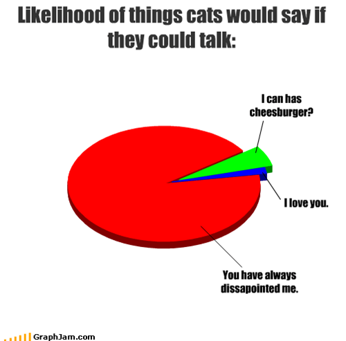 Cats,cheeseburger,disappointed,lolcats,love,talk