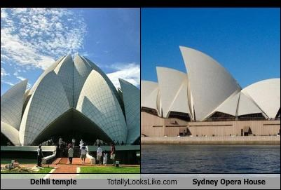 india,Lotus Flower,sydney opera house,temple