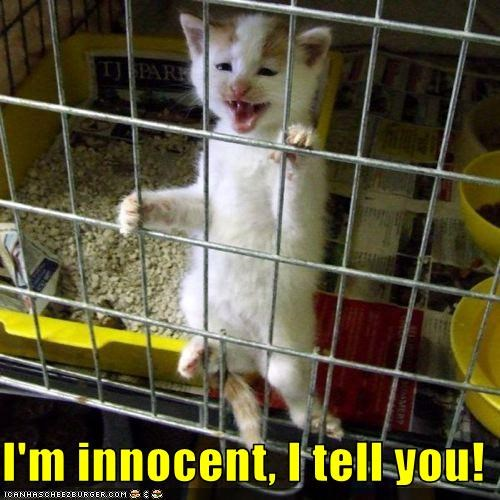 I'm innocent, I tell you!