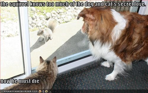 the squirrel knows too much of the dog and cat's secret love.  now he must die