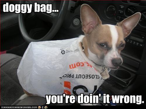 bag,chihuahua,doin it wrong,plastic bag