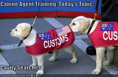 Canine Agent Training: Today's Topic-  Cavity Searches