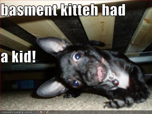 basment kitteh had  a kid!