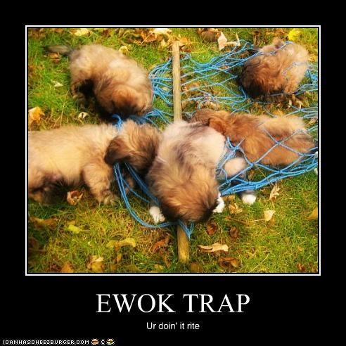 doin it rite,ewok,havanese,puppies,trap,trapped