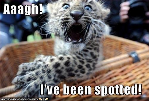 Aaagh!  I've been spotted!