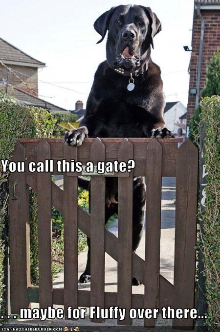 You call this a gate? . . . maybe for Fluffy over there...