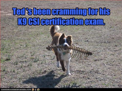 Ted 's been cramming for his  K9 CSI certification exam.