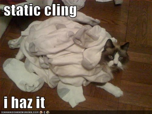 static cling   i haz it