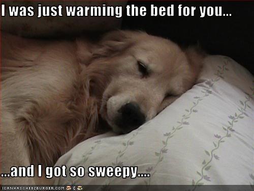 bed,golden retriever,human,sleepy,warm